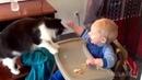 ПОДБОРКА Приколов с кошками