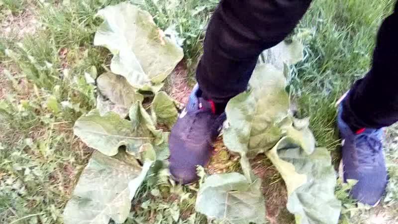 Краш-фетиш капусты | Ожидание реакции от Гринписа