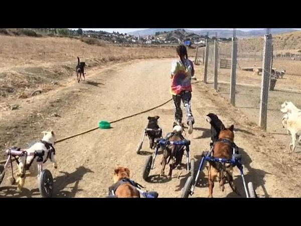 Марокканка спасает бродячих собак и меняет к ним отношение…