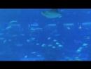 S. E. A. Aquarium