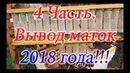 4 Часть Вывод маток 2018 г Одеваем защитные колпачки на маточники, выход и мечение маток
