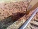 нелегко закопать трубу в болоте Vidio maK