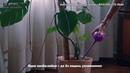 Автополив для растений ФЛАУРА TD 0044