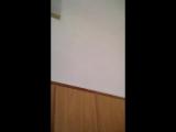 Снежана Трембач - Live