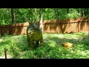 Динозавры в Ульяновске Парк Затерянный мир 02 07 2016