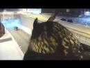 Очень страшное видео, сова - Бэтмен.