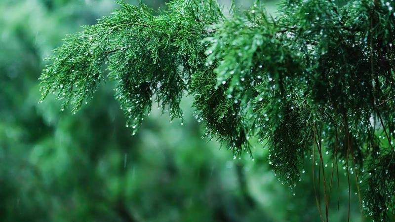 Relaxing Music Soft Rain Sounds - Beautiful Piano Music for Sleeping, Studying Relaxing