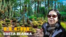 ELCHE - COSTA BLANCA