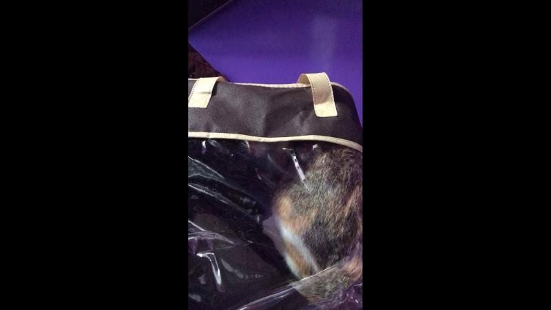 Киса залезла в пакет