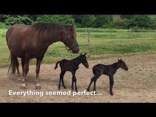Лошадь родила Двойню. Большая редкость - близнецы-жеребята! Twin