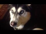 ТОП 10 ГОВОРЯЩИХ СОБАК?Собаки разговаривают с Хозяином!!!Очень круто?