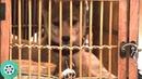 Паркер Уилсон находит на вокзале симпатичного щенка породы акита-ину. Хатико: Самый верный друг