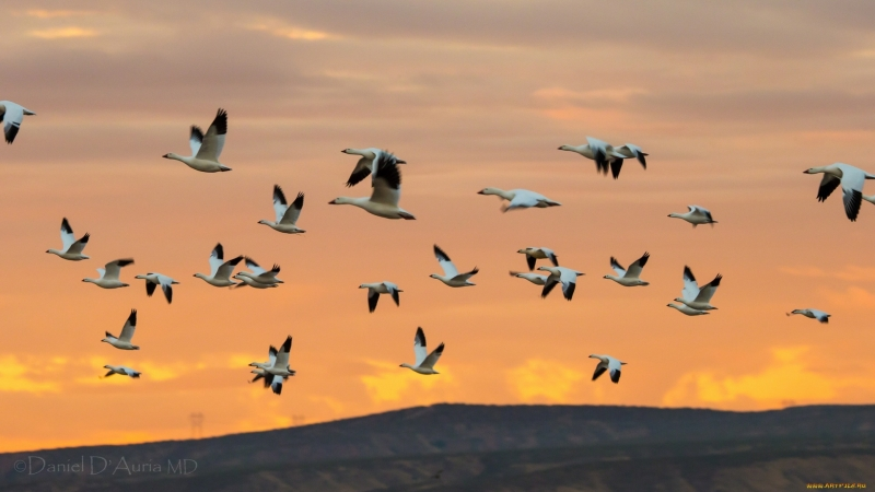 Amazing flights with birds on board a microlight Christian Moullec avec ses oiseaux