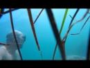 Как я рыбку фугу в прибрежных камнях на Йондо искал