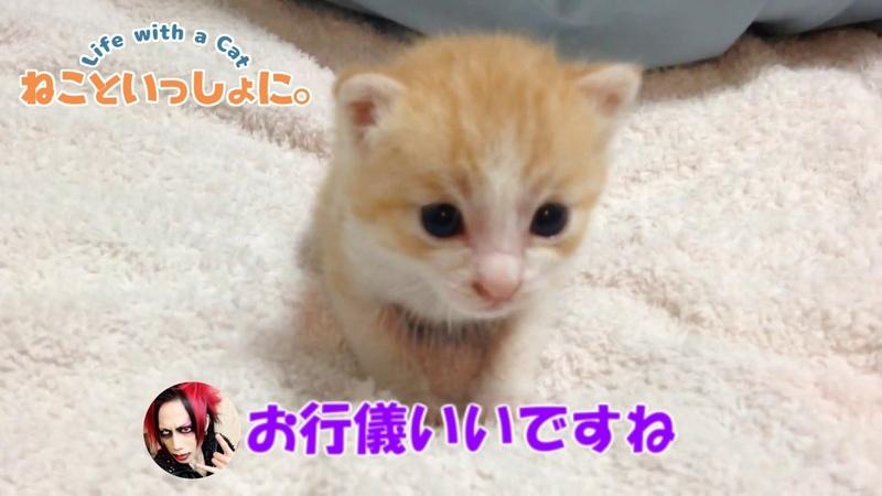 幼少期の小っちゃくて可愛い虎徹くん!(子猫シリーズ②)