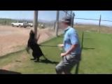 Как играется Чёрная пантера