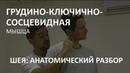 Мышцы шеи Грудино ключично сосцевидная мышца Александр Пилюгин