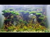 Battle_of_Aqua_Titans_3_Tank_600.mp4