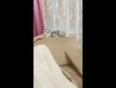 самый тупой кот в мире для вас