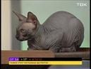 Что делать, если кошка портит мебель - советы ветеринара
