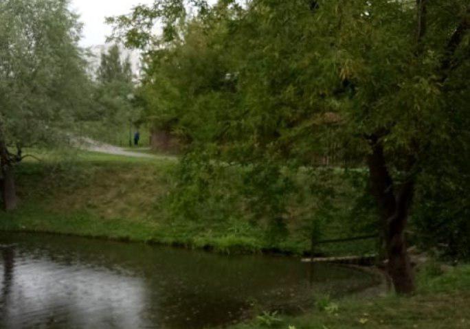 Санитарную обрезку дерева провели в этнодеревне «Бибирево»