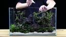How to Aquascape a 20G tank Team Buce Plant x Ultum Nature Systems Skull Island