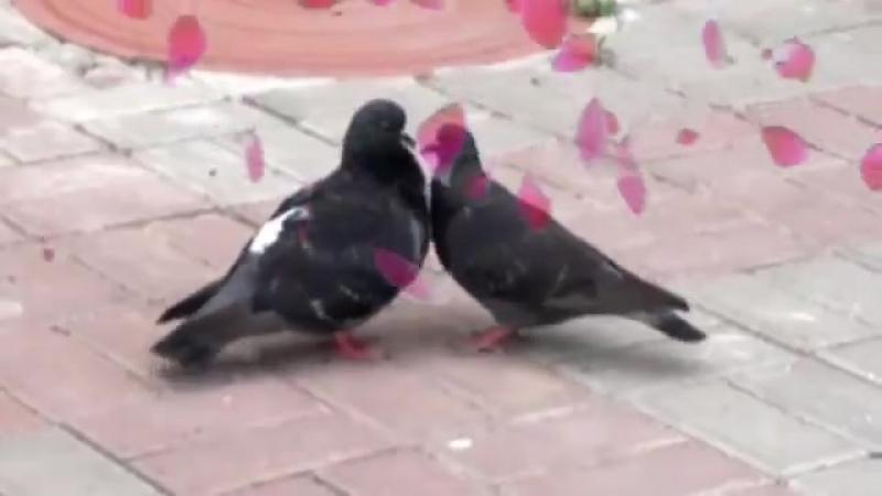 Голуби целуются на крыше - Сергей Одинцов и Азамат Исенгазин