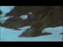Отрывок из фильма Командос