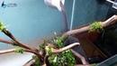 Montaje 120x40x45 Mundo Azul Aquarium