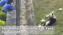 Taishan Sits Quietly For Fans To Take Photos iPanda