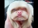 Этот собакен похож на человека