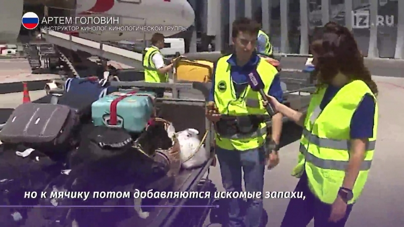 Собака Алиса талисман Аэропорта в Симферополе