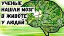 Ученые Нашли Мозг в Животе у Людей