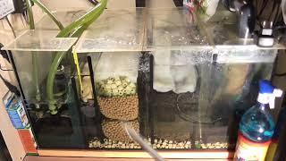 Советы по содержанию аквариума. Часть 3