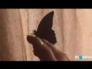 Первый полет Бабочки после рождения