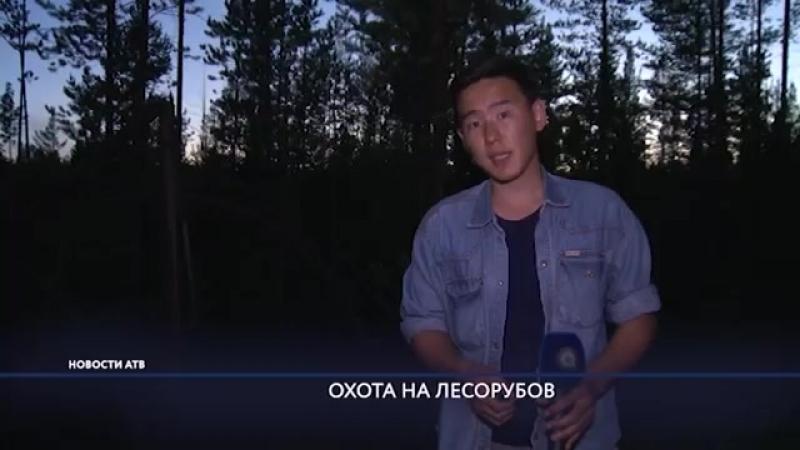 100 тысяч в кузове В лесах Заиграевского района Бурятии поймали группу черных лесорубов