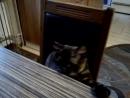 Наша кошка Муся выпросила кусочек хлеба.