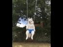 Беззаботный пес
