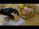 Коллекция пирожных Pierre