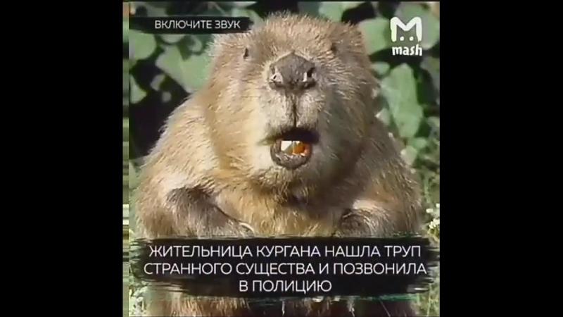 мужик в образе бобра ну как медведь
