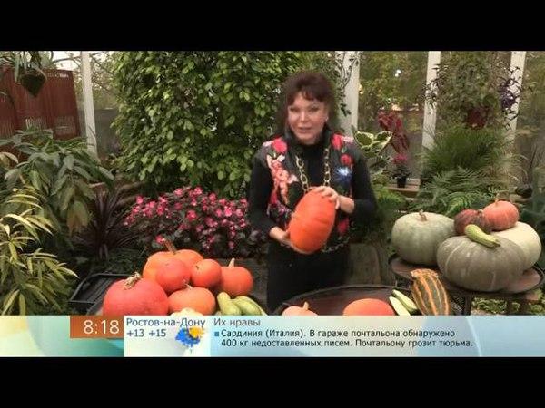 Как хранить тыквы, кабачки и патиссоны (How to store pumpkin, zucchini and squash
