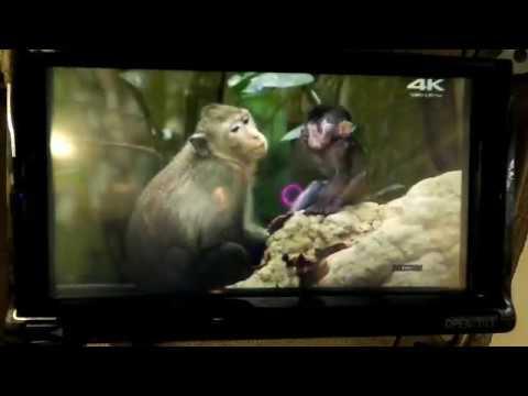 Nissan Leaf - HDMI видео организация видеовхода через интерфейс. Navi, TV, Mirrorlink