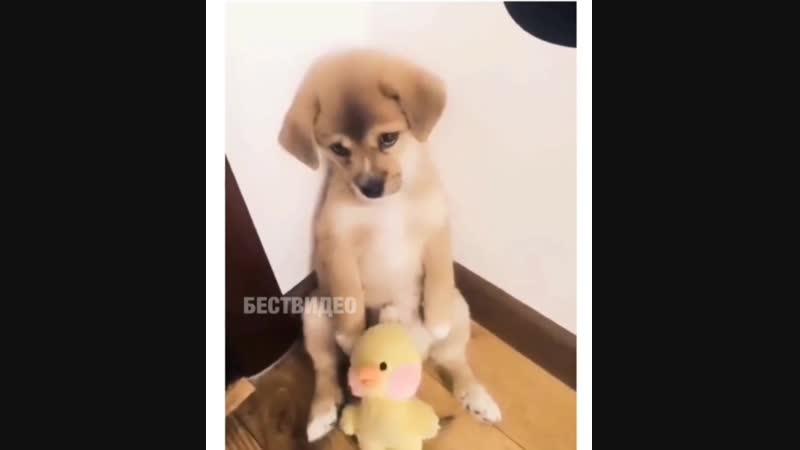 бедный щенок