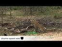 Змея убивает орла
