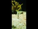 Дом моря в Вене Рыбы всю жизнь живущие в песке