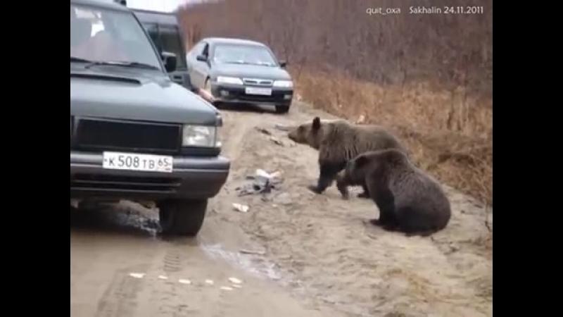 Рэкет на дороге (Медведи попрашайки) ( 360 X 480 )