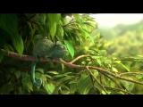 Самый смешной мультфильм 2 Жадный хамелеон! Funny cartoon Greedy Chameleon !