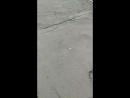 Костик Ослепла - Live