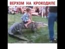 Крокодил пони😐