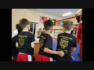 Золотые тигры. Дебют в боксе Самуил 8 лет, Марк 7 лет, Рамазан 8 лет все в синем углу.
